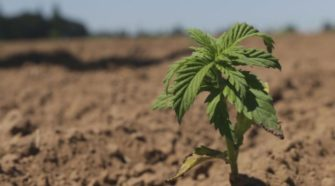 Hemp cultivation rules could change in Siskiyou Co. - KMVU Fox 26 Medford