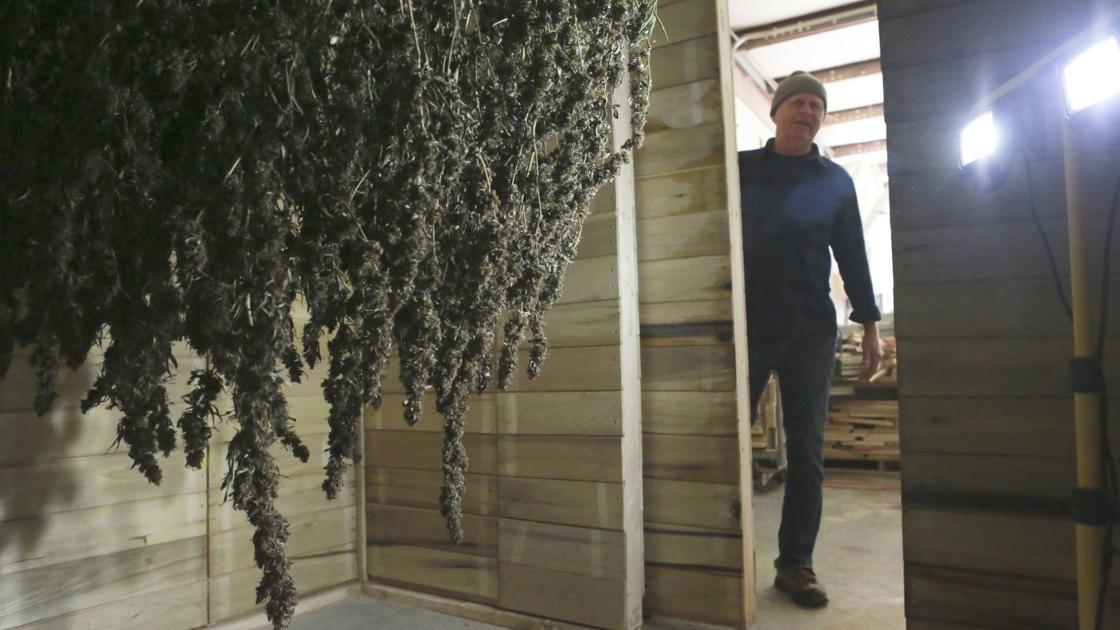 Hemp draws new businesses to Southwest Virginia, despite oversupply - Roanoke Times