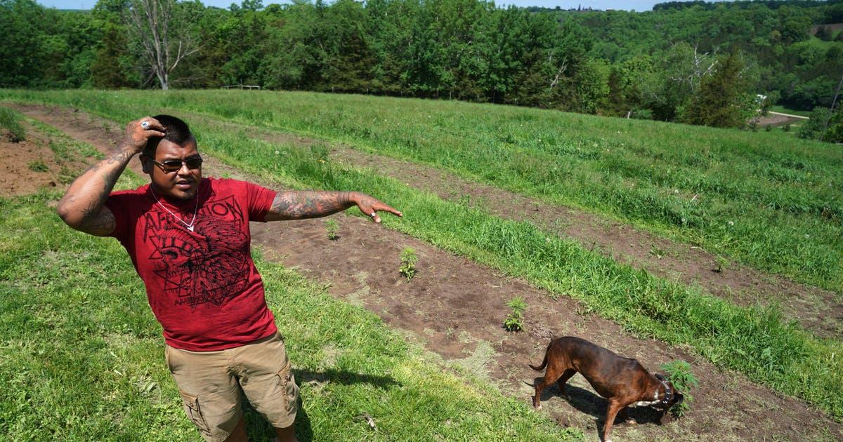 Hemp farmer near Lanesboro settles with state after THC dust-up - Minneapolis Star Tribune