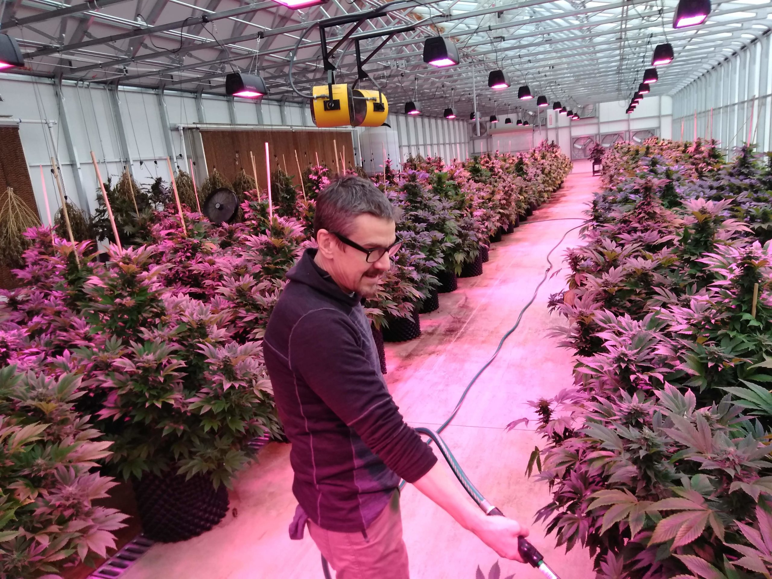 Hemp farmers in Montezuma County face glut, low prices - The Journal