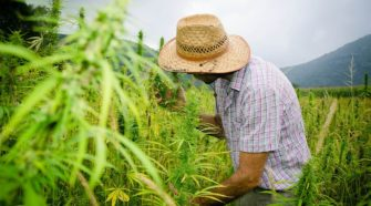 Hemp growers worry about proposed government rules - Fox Business