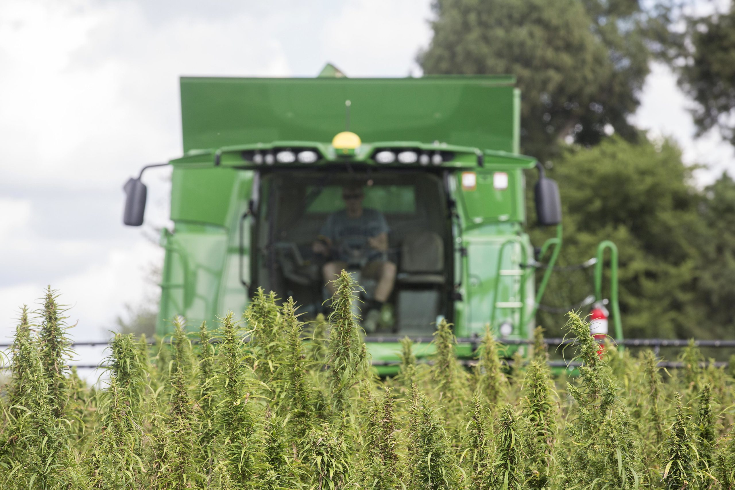 Hemp production in Georgia on hold until funding secured - The Augusta Chronicle