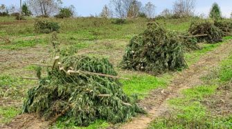 Hemp production risky and restrictive for small farmers - Hemp Industry Daily