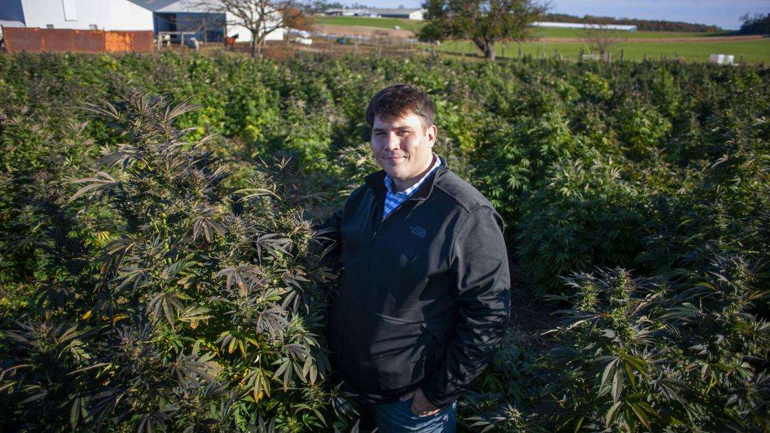 Hemp takes root in Wisconsin - Kenosha News