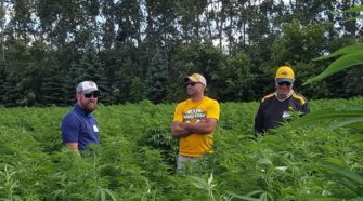 Three Hemposium attendees look over a field of cannabidiol hemp Thursday, Aug. 29, just north of Leonard, N.D. The inaugural symposium included presentations by regulators and researchers as well as insurance, legal and testing experts. Helmut Schmidt / The Forum