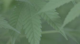 Homegrown hemp? Louisiana starts licensing farmers - BRProud.com