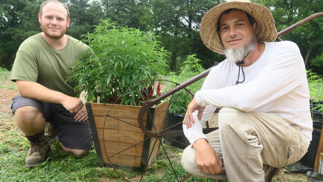 Honey Hill Hemp sprouts purpose in Culpeper County - Fredericksburg.com