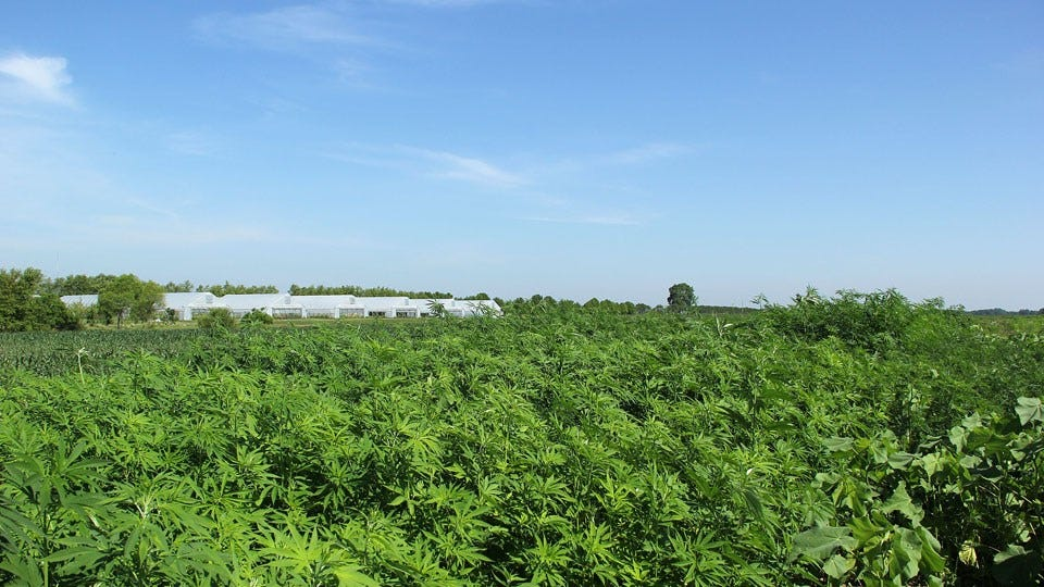 Hoosier Hemp Grower, Processor Plans for Expanded Acres in 2020 - Inside INdiana Business