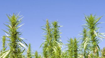 House passes regulations for hemp farming in Georgia - MDJOnline.com