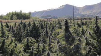 House sends Oregon Hemp Commission bill to Senate - Capital Press
