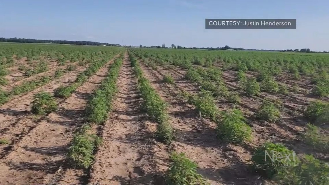 How Colorado's keeping up with the hemp industry - 9News.com KUSA