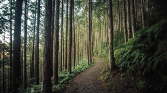 How Forest Bathing Boosts Your Mood