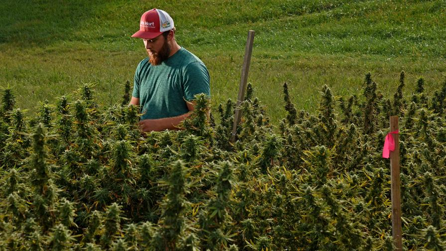 How One Ag Company is Moving Hemp into Mainstream - CropLife