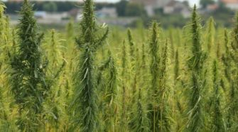 INSIGHT: New USDA Hemp Rule May Propel Production Around the Country - Bloomberg Law