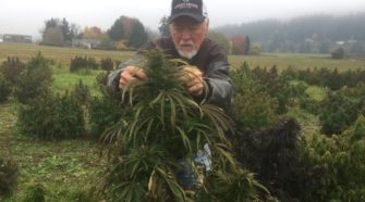In pursuit of big profits, hemp growers blaze a perilous new path in Northwest agriculture - The Seattle Times