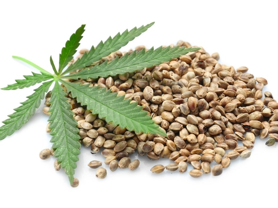 Industrial hemp is a cannabis plant grown for fiber, which is used to make rope, strong fabrics, paper, clothing, shoes and other products. It does not contain the psychoactive compound THC found in cannabis plants.