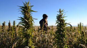 Industrial hemp becomes legal in South Dakota after Noem signs bill - Argus Leader
