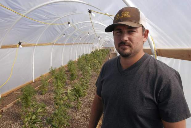 Industrial hemp cultivation: Trials of an emerging commodity in Northern California - The Union of Grass Valley