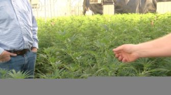 Inside look at the operation of the first hemp plant facility in Scottsbluff - KSNB Local 4
