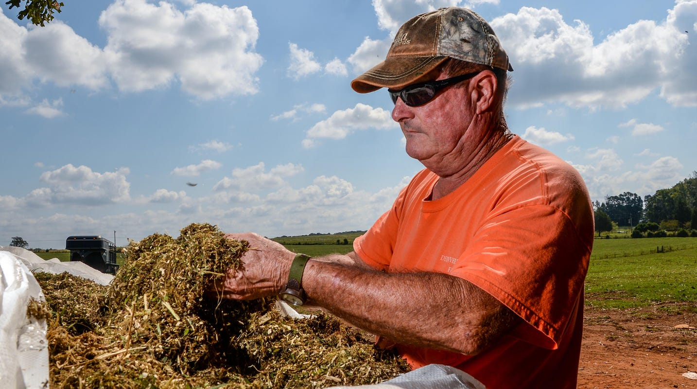 'It's just gloom and doom': Upstate hemp farmers struggle with low returns on big investments - Greenville News