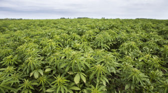 It's time to plant for the future with hemp - The Circle News