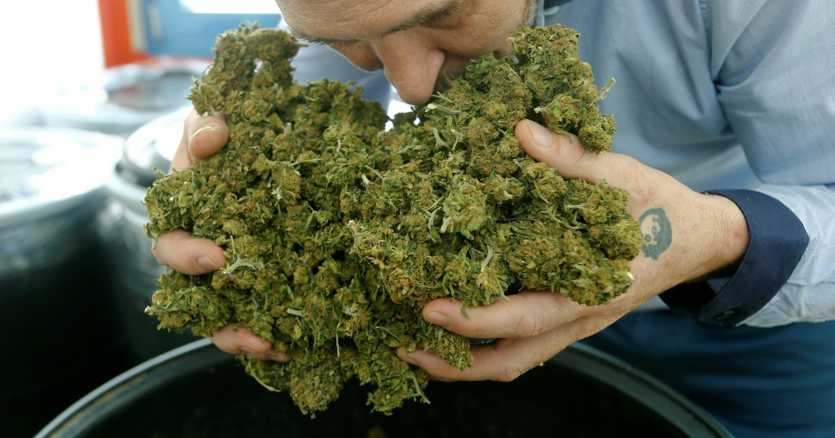 Jobs In Cannabis: What They Are, And How To Get One