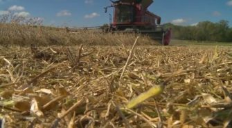 Kansas researchers make it easier for farmers to grow, sell hemp - KCTV Kansas City