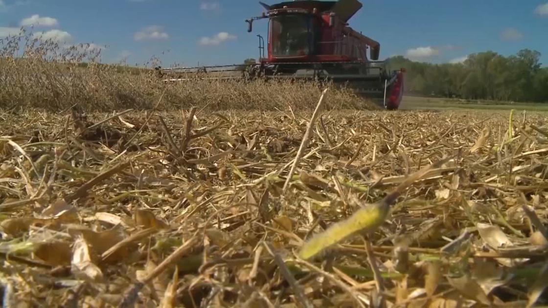 Kansas researchers make it easier for farmers to grow, sell hemp - KCTV Kansas City