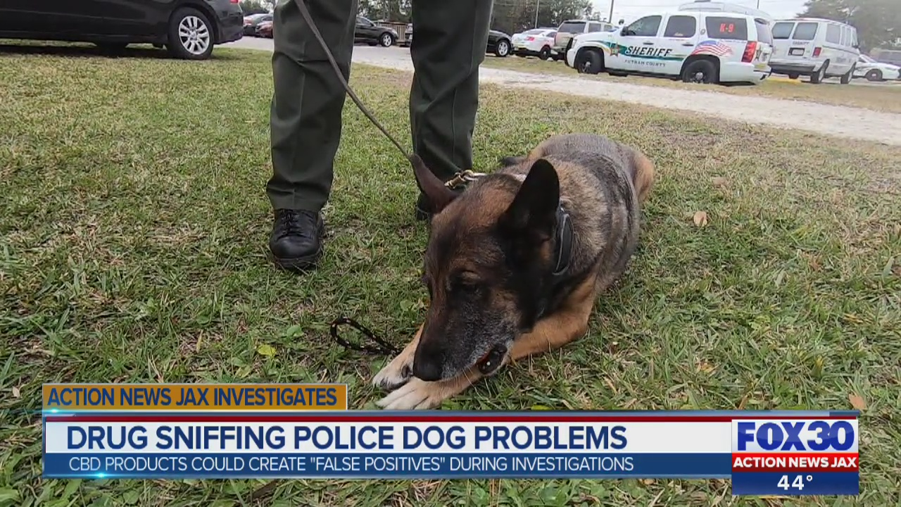 Legalization of hemp & CBD products changing K-9 narcotics officer training - ActionNewsJax.com