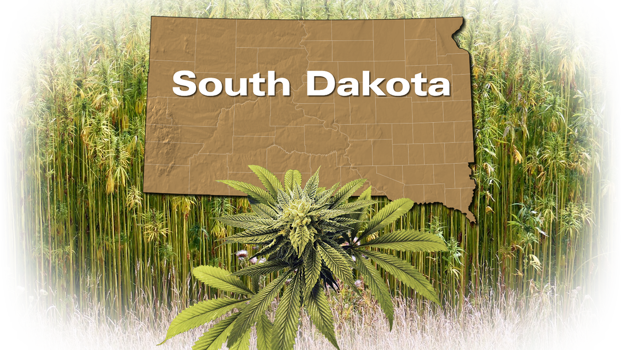Lesmeister says Noem's signing of low-THC hemp legislation is 'exciting' for South Dakota - KELOLAND.com