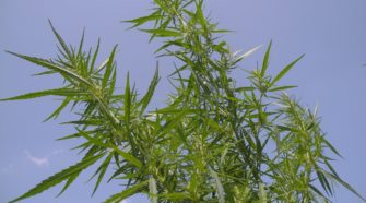 U.S. Hemp Stocks News
