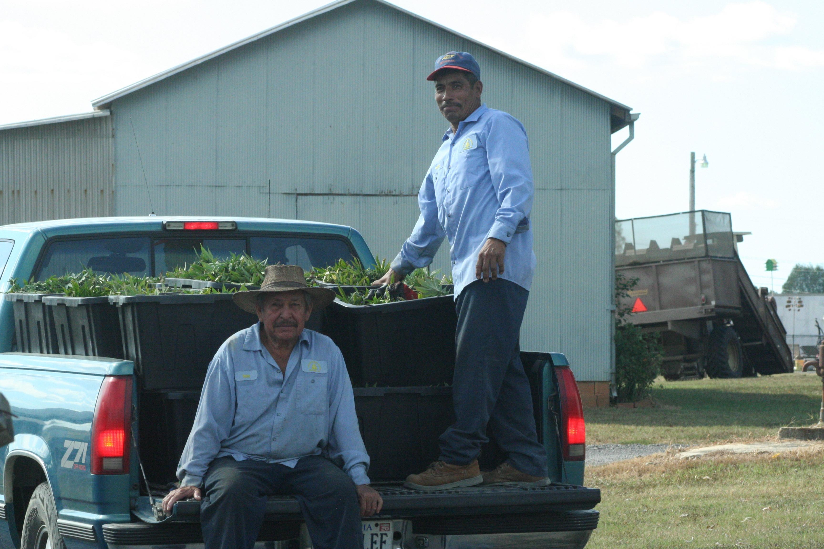 Local farmers suggest hemp is business gamble - Progress Index