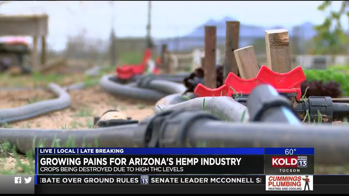 Local hemp farmer optimistic despite industry growing pains - KOLD