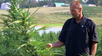 Local hemp farmer tired of getting burned by thieves - KFVS