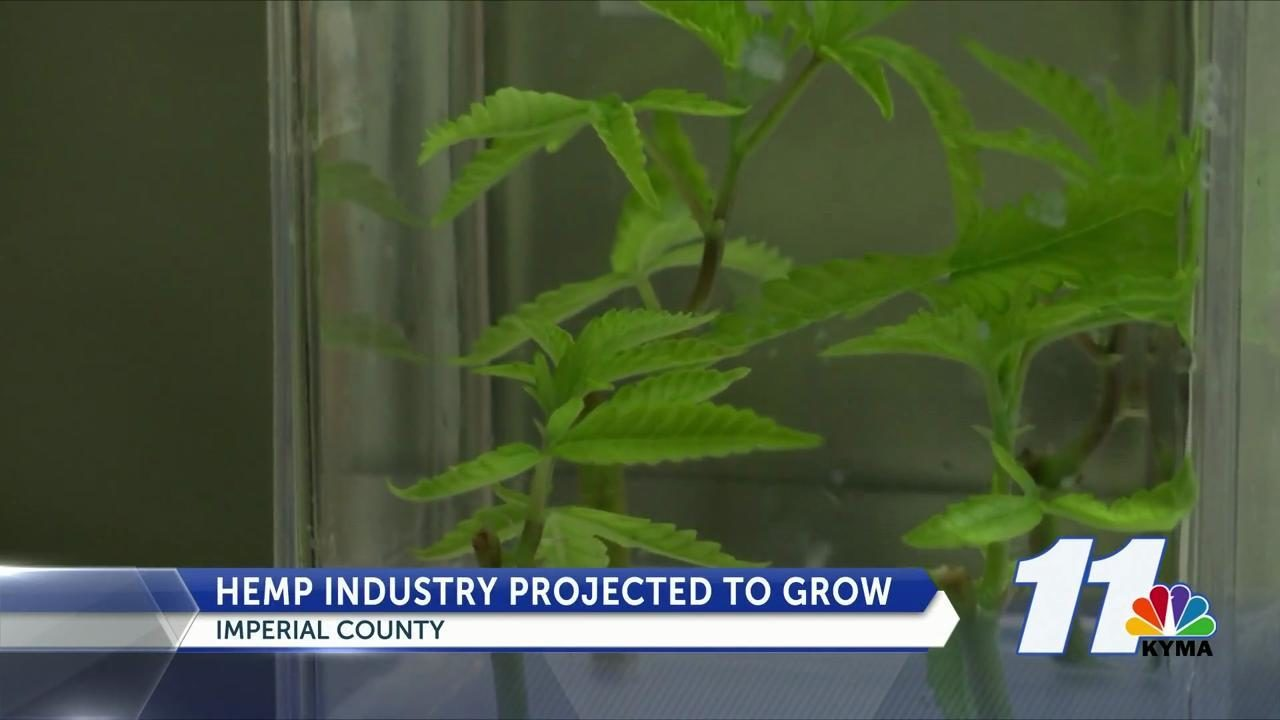 Local hemp industry expected to grow - KYMA