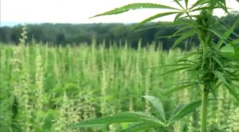 Metro hemp conference offers guidance, caution for local growers - WDAF FOX4 Kansas City