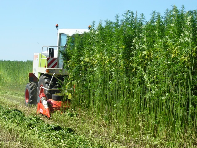 Missouri hemp associations seek to operate under state, not federal, guidelines for 2020 - The Missouri Times