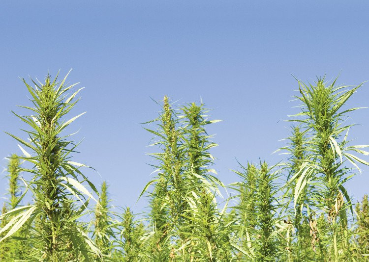 Missouri plants its first industrial hemp following new legislation - Nutritional Outlook