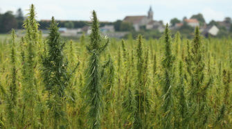 NJ crafting plan to introduce industrial hemp - New Jersey 101.5 FM Radio