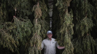 NM's hemp growers still waiting to strike gold - Albuquerque Journal