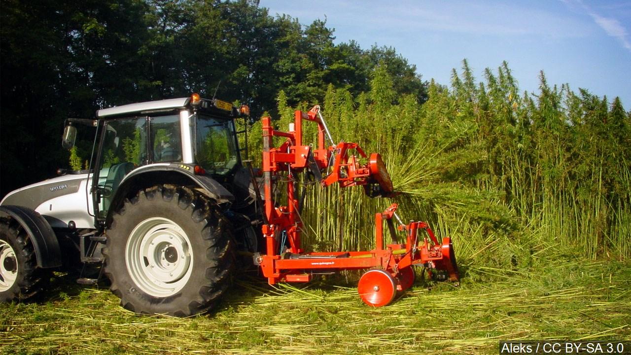 Nebraska ag department cleared for hemp licensing - WOWT
