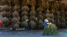 New federal rules loosen industrial hemp regulations - RochesterFirst