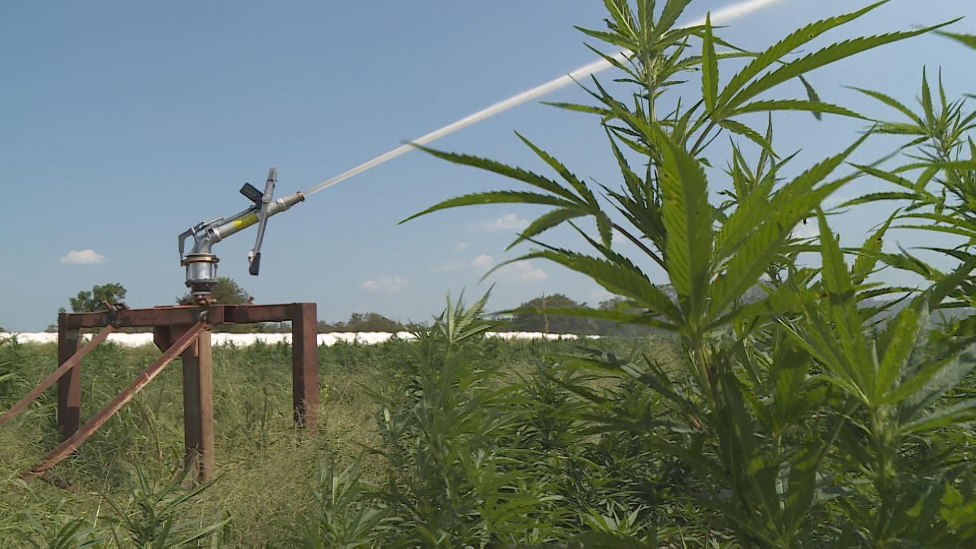 New hemp service center to open in Cynthiana - WKYT