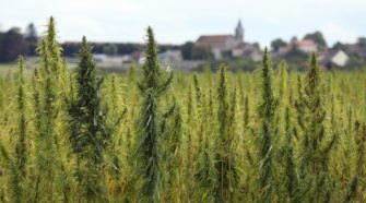 New hemp trade group presses lawmakers on immigration reform, regs | TheHill - The Hill