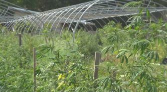 No cap on 2020 hemp farming season in SC - WLTX.com