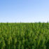 North Bay College First In CA To Offer Degree In Hemp Cultivation - CBS San Francisco