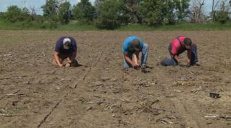 North Dakota farmers grow CBD hemp for the first time - KFYR-TV