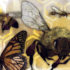 Not Quite So Sweet: Hemp & the Honeybee - Cannabis Now