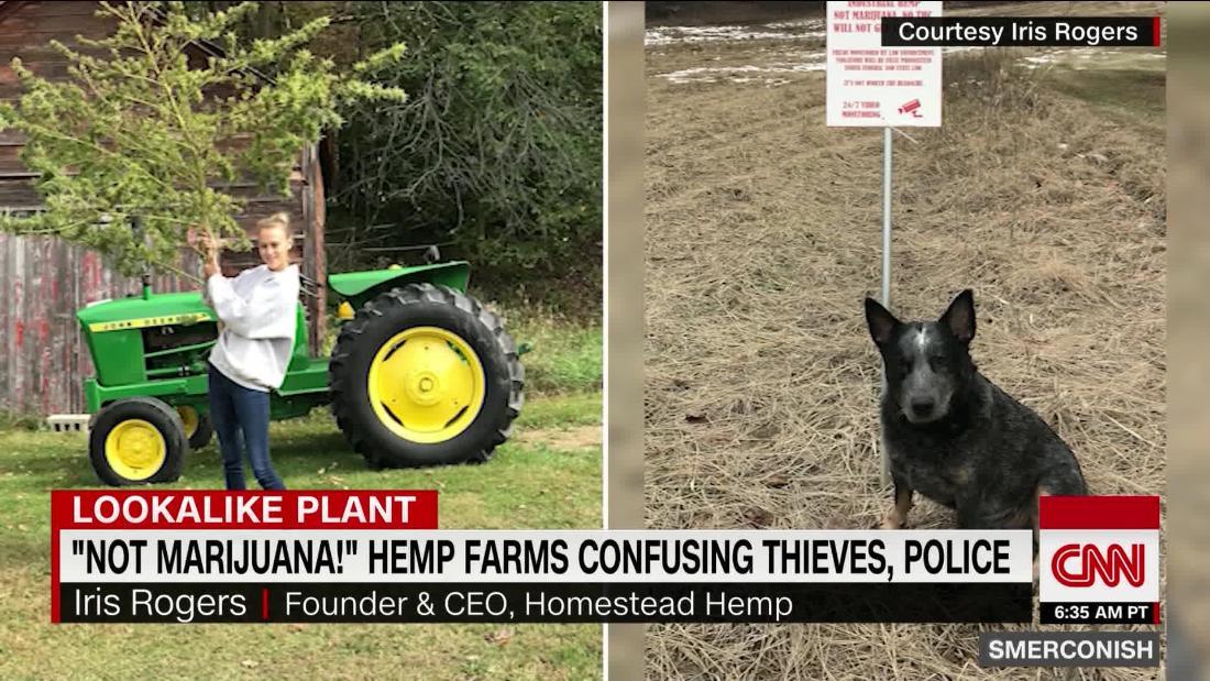 'Not pot!' Hemp farms confusing thieves, police - CNN