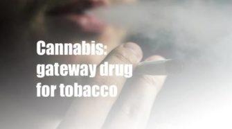 OPINION: Cannabis a gateway drug for tobacco